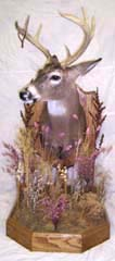 whitetail deer taxidermy by Ohio taxidermist Fritz Birkhimer Jr.