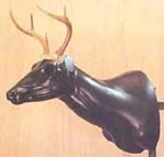 whitetail deer taxidermy form sculpture